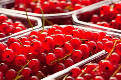 Red currants in plastic container. Close up view of fresh ripe red currants in a plastic container Stock Photo
