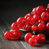Red currants in plate Stock Images