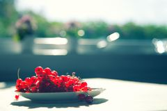 Red currants. On a plate, narrow depth of field Stock Images