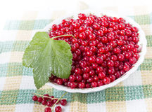 Red currants in a plate. Ripe red currant in ceramic bowl Stock Photography