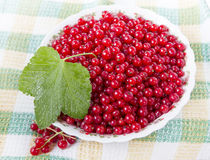 Red currants in a plate. Ripe red currant in ceramic bowl Stock Image