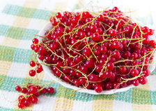 Red currants in a plate. Ripe red currant in ceramic bowl Royalty Free Stock Photos