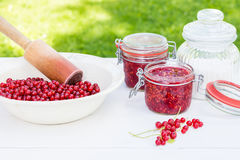 Red currants in the plate with sugar prepared to grind Royalty Free Stock Photo