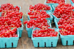 Red currants, Ribes rubrum. Stock Image