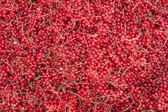 Red currants (ribes rubrum) Stock Photo