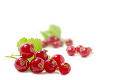 Red currants, ribes rubrum, isolated on white, some blurry berr. Red currants, ribes rubrum, isolated on white, selected focus in the foreground, some blurry Stock Photography