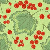 Red currants seamless pattern. Stock Photo