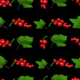 Red currants seamless pattern Stock Images