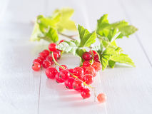 Red currants with sheets Stock Images