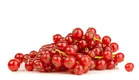 Red Currants Stock Images