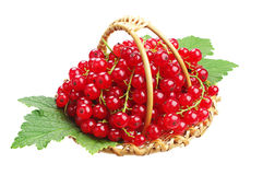 Red currants in small wicker basket Stock Image