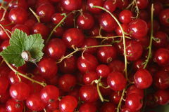 Red currants with snail Stock Photography