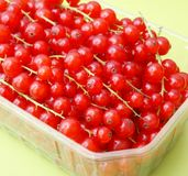 Red Currants. Some fresh currants in a bowl Royalty Free Stock Image