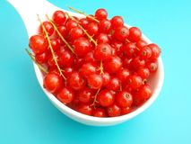 Red Currants. Some fresh currants in a bowl Stock Photography