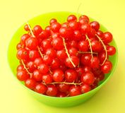 Red Currants Royalty Free Stock Photos