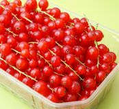 Red Currants. Some fresh red currants in a bowl Royalty Free Stock Image