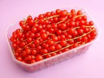 Red Currants. Some fresh red currants in a bowl Royalty Free Stock Images