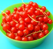 Red Currants. Some fresh currants in a bowl Stock Images