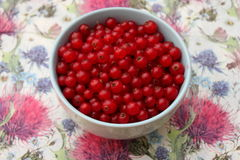 Red Currants. Some red, fresh currants in a bowl Royalty Free Stock Image