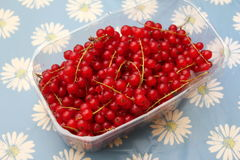 Red Currants. Some red, fresh currants in a bowl Royalty Free Stock Photos
