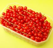 Red Currants. Some fresh red currants in a box Royalty Free Stock Photography
