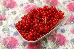 Red Currants. Some red currants fruits in a bowl Royalty Free Stock Images