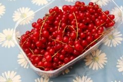 Red Currants. Some red currants fruits in a bowl Stock Photos
