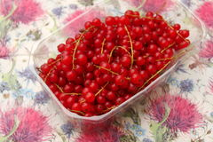 Red Currants. Some red currants fruits in a bowl Stock Image