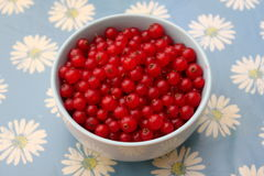Red Currants. Some red currants fruits in a bowl Stock Photography
