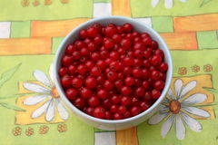 Red Currants. Some red currants fruits in a bowl Stock Images