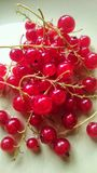 Red currants. Succulent red currants Royalty Free Stock Image