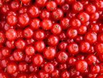 Red currants texture. Texture of fresh red currants Stock Photography