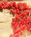 Red currants Royalty Free Stock Image