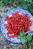 Red currants, top view Royalty Free Stock Photo