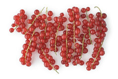 Red Currants on White Royalty Free Stock Image