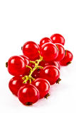 Red currants on a white background Stock Images