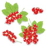 Red currants on a white background Royalty Free Stock Photo