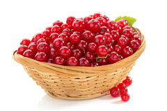 Red currants on white Stock Images