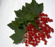 Red currants Stock Photos