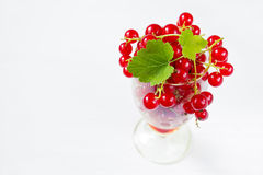 Red currants on white background Stock Image