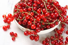 Red currants in white bowl Royalty Free Stock Photo