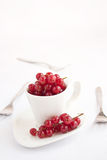 Red currants in white cup Stock Photography