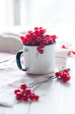 Red currants in a white enamel mug Royalty Free Stock Image
