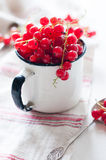 Red currants in a white enamel mug Stock Photography