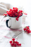 Red currants in a white enamel mug Royalty Free Stock Images