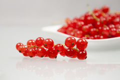 Red currants on a white plate Royalty Free Stock Images