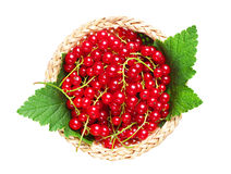 Red currants in wicker bowl Royalty Free Stock Images