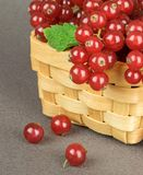 Red Currants in a Wooden Basket Royalty Free Stock Images