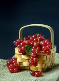 Red Currants in a Wooden Basket Stock Photo