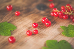 Red currants on a wooden surface Stock Image